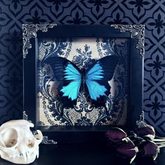 "bursting-passion: ""Victorian Blue Swallowtail Butterfly """