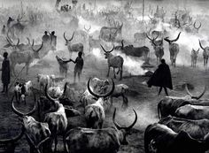 Image result for sebastiao salgado pictures