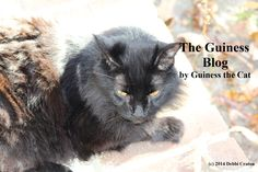 I Didn't Feel Good This Morning, by Guiness the Cat - Persona Paper