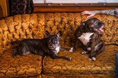 Sarah & Davey's Vintage Lodge Apartment
