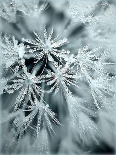 ice crystals...but I see fairies.