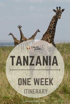 Tanzania One Week Itinerary Ideas Safari Junkie - Tanzania In One Week Itinerary Ideas Travelling To Tanzania Only For A Week And Not Sure What To Include On Tanzania Itinerary Prepare For A Busy Week In Tanzania Choosing Tanzania Itinerary Can Africa Destinations, Travel Destinations, Vacation Travel, Dream Vacations, Family Travel, Tanzania Safari, Alaska Travel, Alaska Cruise, African Safari