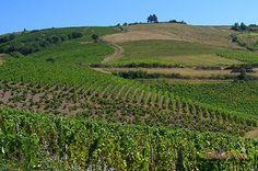 paysage_beaujolais