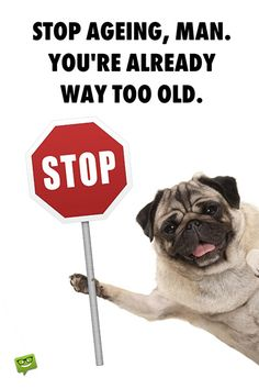 Funny happy birthday image with pug.