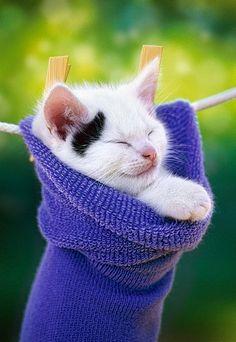 ahh, nice nap spot!