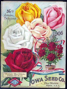 Vintage seed catalogue 1906