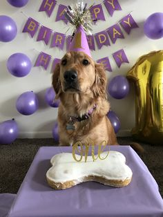 My dogs Birthday photo shoot Dog First Birthday, First Birthday Pictures, Puppy Birthday, 1st Birthday Photoshoot, Puppy Cake, Dog Bakery, Gotcha Day, Puppy Party, Girl And Dog
