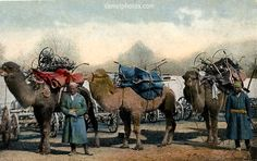 Bactrian camel photo, Russia, 1916