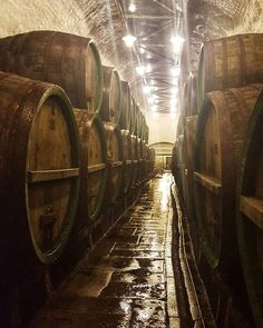 Historical Cellars in the Pilsner Urquell Brewery Pilsen  #pilsen #travel #brewery #pilsner #pilsnerurquell #tour #cellar #old #historical #cask #galaxys6