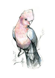 Australian Bird Print A5 Pink and Grey by 56dollarsforbeancake, $13.50