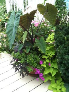 Love the different colors & shapes of foliage