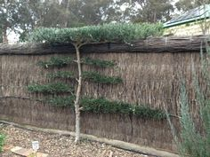 Bella's vege garden fence