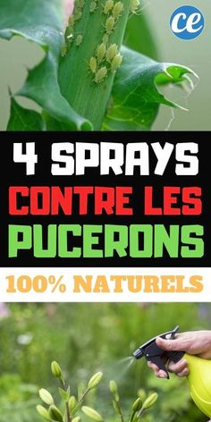 4 Homemade Aphid Sprays (Effective And Natural). Indoor Garden, Outdoor Gardens, Aphid Spray, Get Rid Of Aphids, Rose Cottage, Permaculture, Horticulture, Vegetable Garden, Shrubs