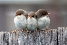 Find and save ideas about Colorful birds, Pretty birds, Beautiful birds and Tropical birds. Cute Birds, Pretty Birds, Beautiful Birds, Animals Beautiful, Beautiful Images, Beautiful Photos Of Nature, Animals And Pets, Baby Animals, Cute Animals