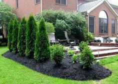 Wonderful Outdoor Privacy Fence #7 - Privacy Landscaping Plants