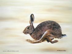 HARE TODAY, pastel on pastel card by Ali Bannister. For limited edition prints and information on commissions see: www.alibannister.com  Drawn with kind permission from Matt (vlad259 on flick.com) from one of his fantastic photographs.