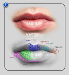Anatomy for sculptures. Lip.
