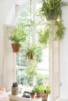 12 Common House Plants That Filter Your Air All Day Spider plants are amazing for purifying air and are non-toxic to your kitties! (List of pet friendly plants) Common House Plants, Hanging Air Plants, Wall Of Plants Indoor, Indoor Hanging Baskets, Indoor Plants Clean Air, Hanging Flower Pots, Indoor Herbs, Outdoor Plants, Hanging Planters