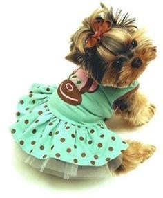 Adorable Yorkie Pup... fundogpics.com