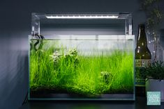 Need inspiration for a nano planted fish tank? Glass Aqua is the perfect place to find the look you want for your planted aquarium, aquatic plants, and more! Nano Aquarium, Nature Aquarium, Planted Aquarium, Green Environment, Aquatic Plants, Fish Tank, Perfect Place, Underwater, Healthy