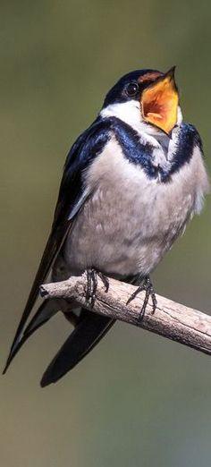 SING MY SONG ;-))) #bird #photo by Jacques de Klerk -- www.photo.net