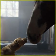 Budweiser Super Bowl Commercial 2014 (Video) – Clydesdales Horses & Puppy Love!   2014 Super Bowl Commercials : Just Jared