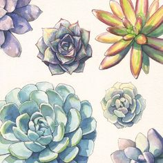 Succulent rosettes in watercolor and ink. #succulentsunday