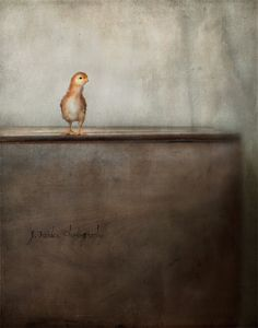 Baby... | Jamie Heiden via Flickr -