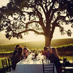 dine under the tree at sunset