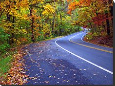 The Pig Trail in Northwest Arkansas.  One of the most gorgeous (and treacherous) drives in the U.S.