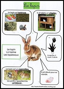 Fiche d'identité le lapin French Worksheets, Worksheets For Kids, Activities For Kids, French Classroom, French Resources, Nature Study, Animal Projects, Learn French, French Language