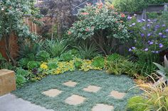Patterns in the landscape Dymondia. Patterns in the landscape by David Feix Landscape Design, via Fl Succulent Landscaping, Landscaping Tips, Front Yard Landscaping, Succulents Garden, Bosch Pts 10, Landscape Design, Garden Design, Drought Tolerant Landscape, California Garden