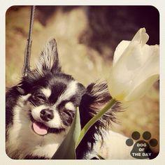"""DOG OF THE DAY  @coro_dog May.20,2012"