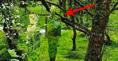 You Could Walk Through These Woods And Never Spot The Awesomeness Hiding Here