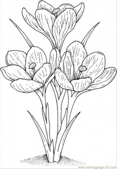 flower Page Printable Coloring Sheets | Coloring Pages Crocus 2 (Natural World > Flowers) - free printable ...