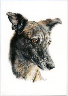 Galgo mestizo. Galgo mix. Ilustración lápiz. Illustration pencil. Dog portrait Pencil Art Drawings, Dog Art, Pet Portraits, Female Art, Dog Breeds, Illustration, Pictures, Painting, Friends