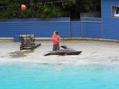 Zoo de La Flèche; une otarie faisant son numéro