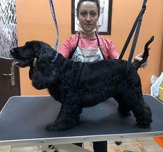 Η μέρα μας σήμερα έκλεισε με την όμορφη Molly!  Επικοινωνήστε μαζί μας για ραντεβού και για πληροφορίες σχετικά με τον καλλωπισμό των τετράποδων φίλων σας. -->www.petshop.gr<-- . . Follow us: @houseofpetsxatzopoulos . . #dog #dogs #grooming #dogspa #puppy #pet #pets #loveanimals #doglovers #cutedog #dogofthedy #dogofinstagram #lovedogs #lovepets #skilos #skylos #katoikidia #σκυλος #κατοικιδια #κουρεμα #καλλωπισμος #houseofpets #petshopgreece #petshop #pet_shop_gr Dog Toys Amazon, Interactive Dog Toys, Love Dogs, Kids Toys, Plush, Animals, Childhood Toys, Animales, Animaux