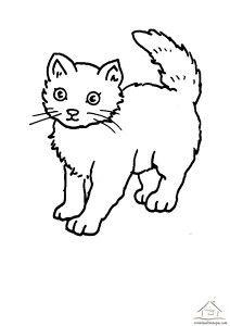 Kedi Boyama Calismalari Kedi Kedi Kopek Boyama Sayfalari