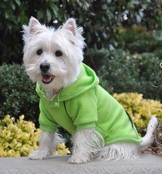 Fleece Lined Sport Sweatshirt Hoodie for Dogs in Color Lime Green