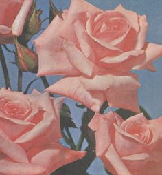 Pastel Goth | Roses