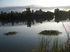 Evening at the lake near the Fluvià river in Torroella de Fluvià. The river banks have recently been declared part of the protected area of the Aiguamolls Bird Sancturary and Nature Reserve.