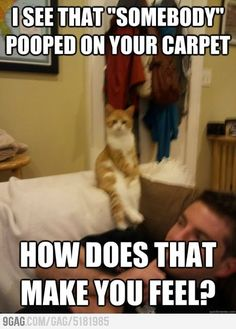 Therapist cat - for those who know me this fits my situation in soooooo many ways!