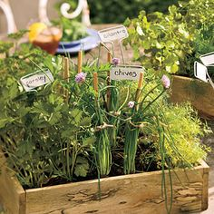 Cool-Season Herbs