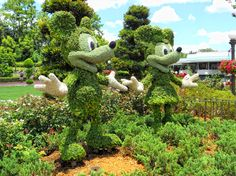 Mickey and Minnie bushes