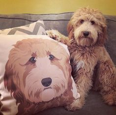 Custom Pet Portrait  Custom Pet Pillow  Fiance Gift by DesignMyDog