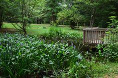 Pond at University of Alabama Arboretum Tuscaloosa AL USA