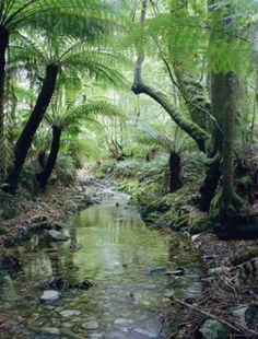 flora amazzonia - Cerca con Google
