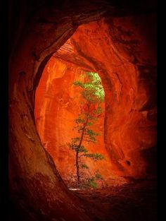 The sun tree is the only tree located in the freedom caverns. It gets it nutrients from a deep hole located above. It also stores water as its roots reach an underground water source just below it.