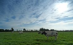 Foto: Corina Magielse (Wernhout) 22-08-2014